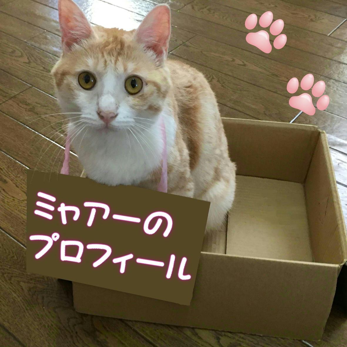 ちゃしろ猫ミャアーのプロフィール