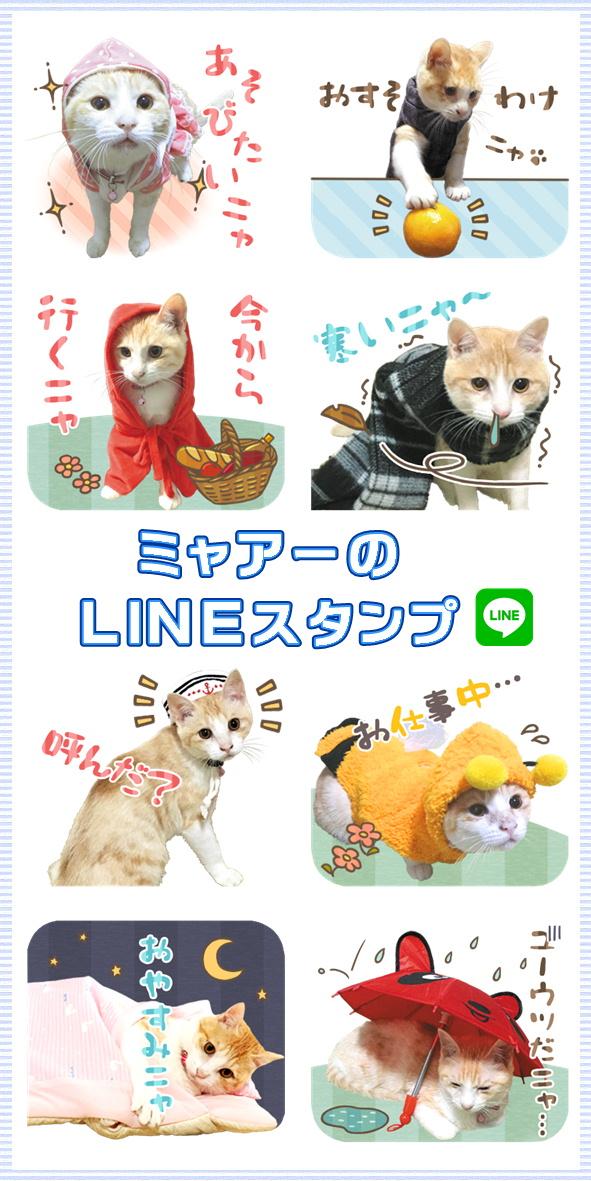 ちゃしろ猫ミャアーのLINEスタンプ