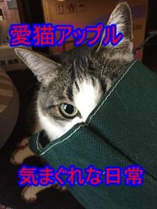 愛猫アップル気まぐれな日常ブログ