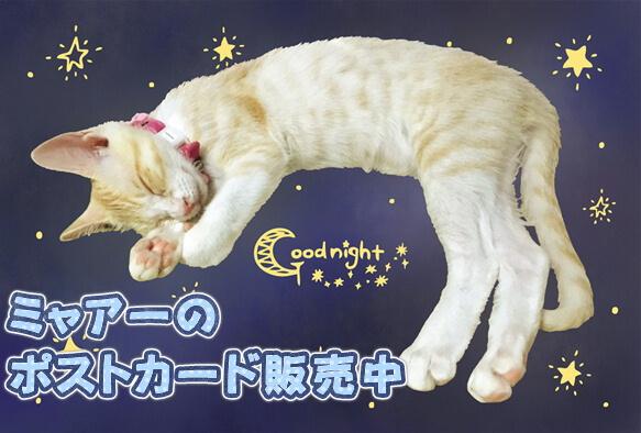 メス猫ミャアーオリジナルグッズの専門店